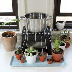 50 Feet Self watering Wick Cord for Vacation Self-watering Planter Pots DIY Automatic Watering Device System Potted Plant Sitter Auto Drip Irrigation Waterer to Water African Violet Cotton String Rope - Plants and garden - Water Plants, Potted Plants, Indoor Plants, Pots For Plants, Hanging Plants, Herb Garden, Garden Plants, Water Garden, Container Gardening