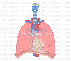 Get Body Smart Anatomy and Physiology Flash Tutorials
