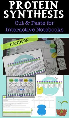Protein Synthesis INB Protein Synthesis Interactive Notebook Protein Synthesis Cut a n d Paste