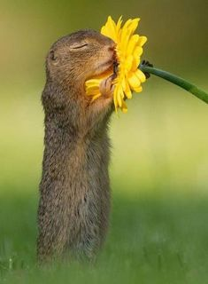 Mutual of Omaha's Wild Kingdom - Ruth Fer. - Elisbeth Steindl - Mutual of Omaha's Wild Kingdom - Ruth Fer. Mutual of Omaha's Wild Kingdom - - Cute Creatures, Beautiful Creatures, Animals Beautiful, Animals Amazing, Cute Funny Animals, Cute Baby Animals, Smiling Animals, Nature Animals, Animals And Pets