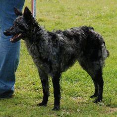 http://www.outsideonline.com/1859826/20-worlds-rarest-dog-breeds