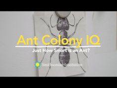 "Smithsonian Education | ""Explore with Smithsonian Experts"" Film Series 