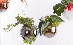 Závesné kvetináče Jungles, Terrarium, Plants, Garden, Design, Home Decor, Dinner, Garten, Planters