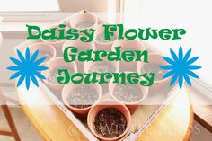 Daisy Flower Garden Journey for girl scouts. Session 1... great ideas!