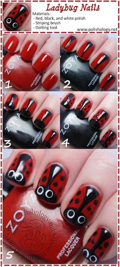 more ladybugs!!!