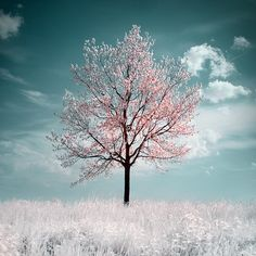 Cherry tree... I like the colors, I have some blue agate beads that remind me of the sky in this photo.