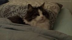 Tommy in bed
