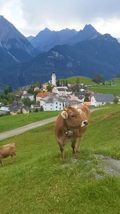 Switzerland Travel Guide, Switzerland Itinerary, Beautiful Photos Of Nature, Beautiful Places To Travel, Nature Gif, Winter Scenery, Adventure Is Out There, Planer, Trip Advisor