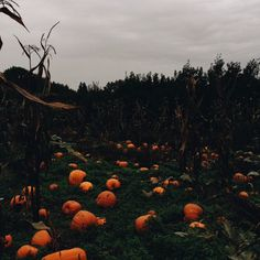 Pumpkin Spice Everything Spooky halloween caldron Fall Wallpaper, Halloween Wallpaper, October Country, Season Of The Witch, Autumn Aesthetic, Autumn Cozy, Spooky Scary, Creepy, Autumn Scenery