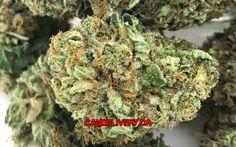 BUBBA Gump cannabis