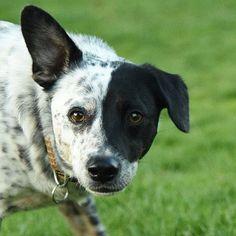 Actijoy (@actijoy) • #actijoy #dogfood #dog #dogs #doggy #dogshow #eatingdog #fussyeater #dogtraining