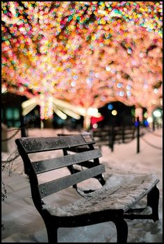 Bench and Christmas Lights in the Snow