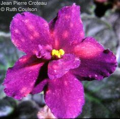 Jean Pierre Croteau with lovely puff fantasy flowers