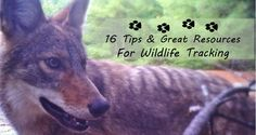 How to Get Started Tracking Animals: 16 Tips & Resources -