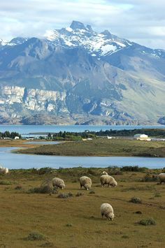 #Santa Cruz - #Punta Bandera Programá tus vacaciones, vení a la #Patagonia  @viajaportupais @santacruztur Central America, South America, Forest Mountain, Travel Aesthetic, Ushuaia, Nice View, Beautiful Beaches, Twitter, Farmhouse