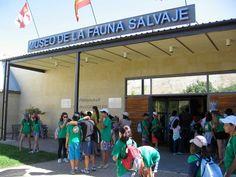 Galería de fotos » Excursiones - Museo de la Fauna Salvaje (2) | GMR summercamps