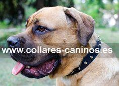 Ecónomico estrecho collar para perros Cane Corso diseño de moda pinchos en cuero - S33S