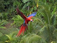 Desktop achtergronden met papegaaien in allerlei kleuren. Mooie hd foto's van deze dieren.