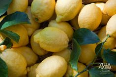 P.G.I Sorrento Oval Lemons. Main ingredient for an authentic limoncello!