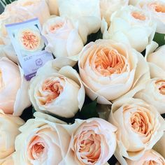 #Juliet. Order fragrant and other garden roses, also the David Austin cut rose collection, @ www.parfumflowercompany.com.