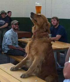 """Képtalálat a következőre: """"dog balancing beer on head"""""""