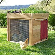 Raising chickens has gained a lot of popularity over the past few years. If you take proper care of your chickens, you will have fresh eggs regularly. You need a chicken coop to raise chickens properly. Use these chicken coop essentials so that you can. Chicken Coop Designs, Small Chicken Coops, Chicken Coop Run, Chicken Pen, Portable Chicken Coop, Backyard Chicken Coops, Building A Chicken Coop, Chickens Backyard, Diy Chicken Waterer