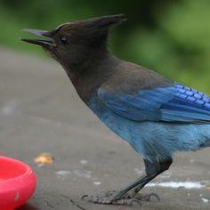 Backyard birding - enjoy nature from inside!