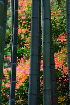 Bamboo forest at Nanzen-ji temple, Kyoto, Japan 南禅寺 京都