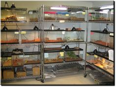 reptile room this will be me Gecko Terrarium, Aquarium Terrarium, Reptile Terrarium, Terrarium Table, Terrarium Ideas, Reptile Habitat, Reptile Room, Reptile Cage, Animal Room