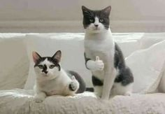 WE GOT THUMBS! - LOLcats is the best place to find and submit funny cat memes and other silly cat materials to share with the world. We find the funny cats that make you LOL so that you don't have to. Animals And Pets, Funny Animals, Cute Animals, Funny Bunnies, Cute Cats, Funny Cute, Hilarious, Funny Pics, Sweet Dogs