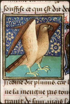 ( - p.mc.n.) Aigle aux ailes déployées Bartholomaeus Anglicus 1447 bm Amiens