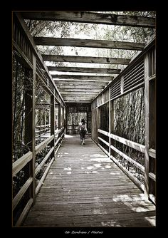 This picture is a walkway at the Hattiesburg Zoo.  There are over 55 species of animals here and a carousel for the kids to enjoy.  Learn the secrets about Zebras as you walk around this incredible zoo!