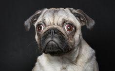 Ludzkie imiona i ludzkie portrety... zwierząt | Fotoblogia.pl