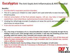 Eucalyptus The Anti-Septic Anti-Inflammatory & Anti-Microbial
