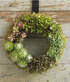 Succulent Wreath - perfectly modern yet rustic accent for my front door (or my dinner table).  I can imagine a little tree trunk inside as a candle base!  $98