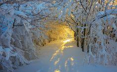 Ormanda bir kış sabahı, Roberto Melotti. Anları Yandex.Görsel'de yakalayın.