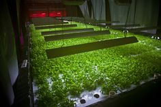 Abandoned Food Factory to be Transformed into Chicago's First Zero-Energy Vertical Farm!
