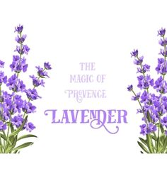 The lavender elegant card with frame of flowers and text. Lavender garland for your text presentation. Label of soap package. Label with lavender flowers. Flower Text, Flower Frame, Lavender Flowers, Purple Flowers, Lavender Cottage, Circle Labels, Instagram Frame, Soap Packaging, Design Elements