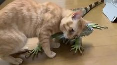 Cute Funny Animals, Cute Baby Animals, Animals And Pets, Cute Cats, Funny Cats, Adorable Kittens, Dragon Cat, Gato Gif, Cute Animal Videos
