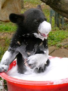 Bear takes a bath...