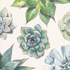 Succulent print design - Agave, Echeveria, and Graptopetalum species in Watercolor and Ink. I like making these patterns but not sure what to do with them. Any ideas? Watercolor And Ink, Watercolor Paintings, Watercolor Ideas, Watercolors, Painting Inspiration, Art Inspo, Design Inspiration, Watercolor Succulents, Succulents Art