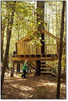 Tree - tent platform