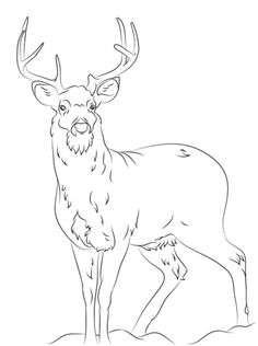 white tail deer coloring page for the top adult coloring books and supplies
