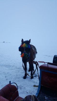 Kars, çıldır gölü