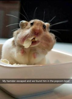Image from http://thefunnybeaver.com/wp-content/uploads/2015/02/funny-hamster-eating-popcorn.jpg.