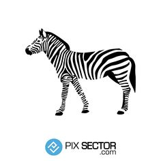 Zebra illustration vector. 1000+ awesome free vector images, psd templates, icons, photos, mock-ups and more!
