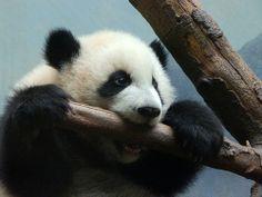 Mei Huan's teething log | Flickr - Photo Sharing!