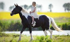 Les écuries du Louis d'or à Naves : 2 séances d'1h de cheval ou de poney pour 1 ou 2 personnes: #NAVES 18.00€ au lieu de 36.00€ (50% de…