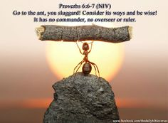 "ImageCourtesy: thedailyverses.blogspot.comProverbs 6:6 (NIV) ""Go to the ant, you sluggard;consider its ways and be wise!"" Amen. Most at times, we are only interested in accumulating earthly gains a..."