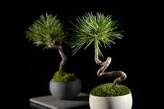 盆栽は、目ではなくココロで見る | Daily Tips ~今日のヒラメキ~ | For M | 男のヒラメキ実用マガジン